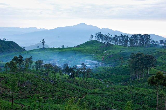 Plantations de thé à l'aube vues du Lipton's seat au Sri Lanka