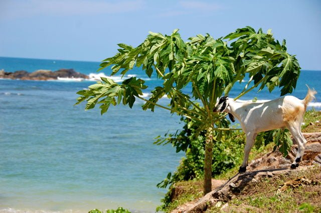 A Galle au Sri Lanka