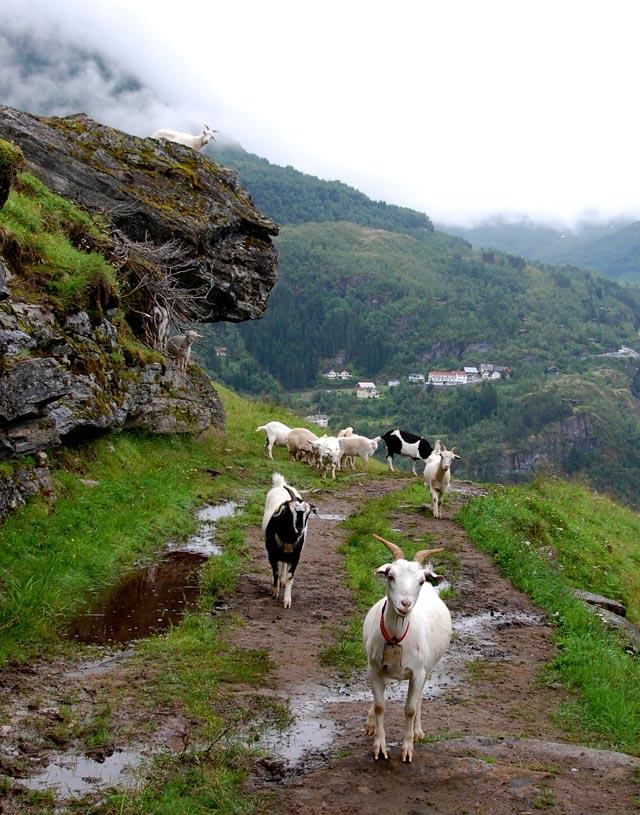 Norvège, randonnée dans le Geirangerjford