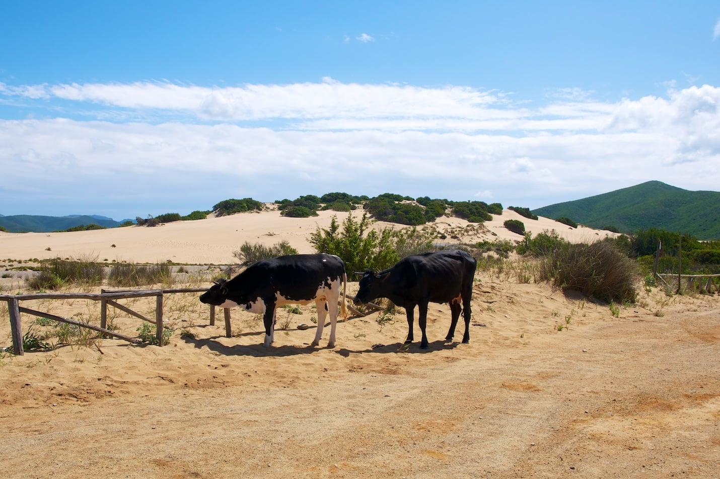 Dunes de Piscinas en Sardaigne
