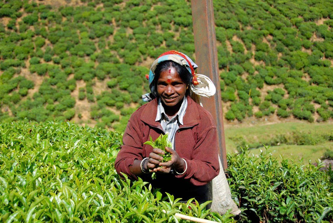 Sri Lanka : rencontre avec une cueilleuse de thé - 22 v'la Scarlett